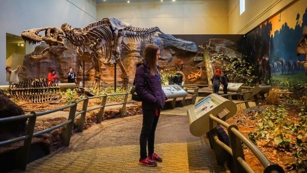 T-Rex at the Carnegie Museum of Natural History