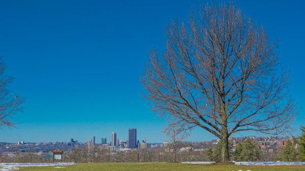 Pittsburgh from Schenley Park