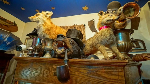 Taxidermy bear heads are always the life of the party.
