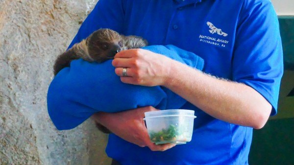Baby Sloth Feeding at the Aviary - Don't ask why it isn't a bird.