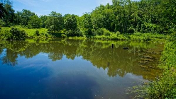 Pond at Beechwood Farms