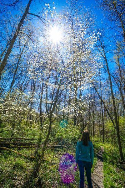 Raccoon Creek Wildflower Reserve