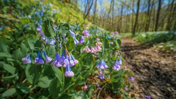Raccoon Creek State Park Wildflower Reserve