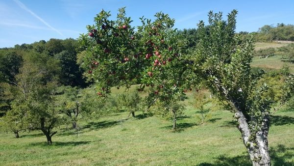 Norman's Orchard in Pittsburgh