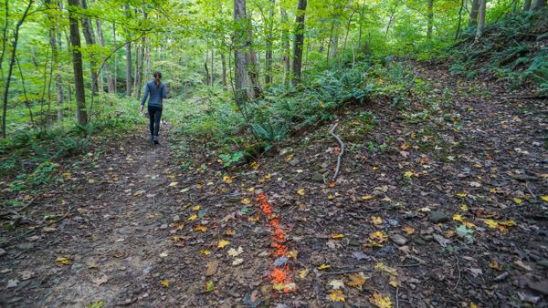 Trail Markings at Montour Woods Conservation Area