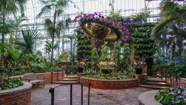 Phipps Conservatory For The Orchid And Tropical Bonsai Show