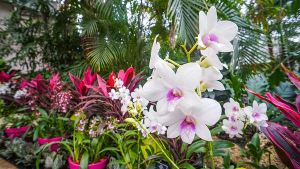 Orchids in the Phipps Palm Court