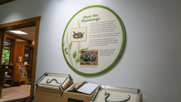 Massasauga Rattlesnake Display