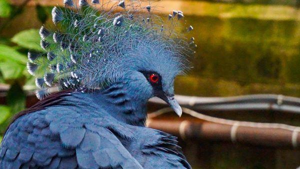 Bird at the National Aviary