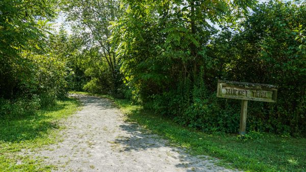 Wide Open Trail at Winnie Palmer Nature Reserve