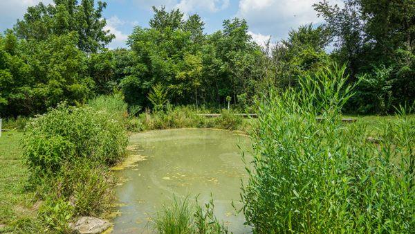 Pond on Winnie Palmer Nature Reserve