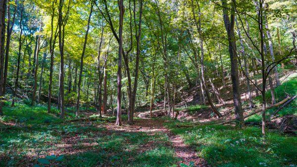 Devil's Hollow Conservation Area
