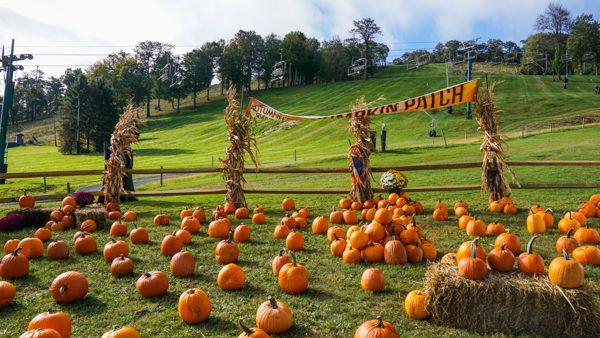 Autumnfest pumpkin patch at Seven Springs