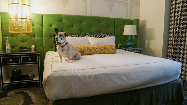 Dogs stay free at the Kimpton Hotel Monaco