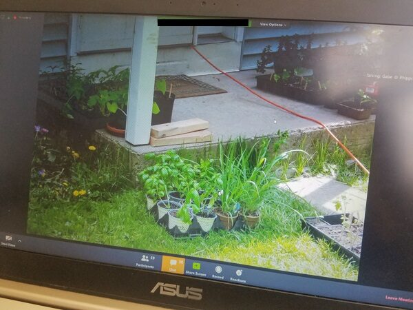 Online Classes at Phipps Conservatory