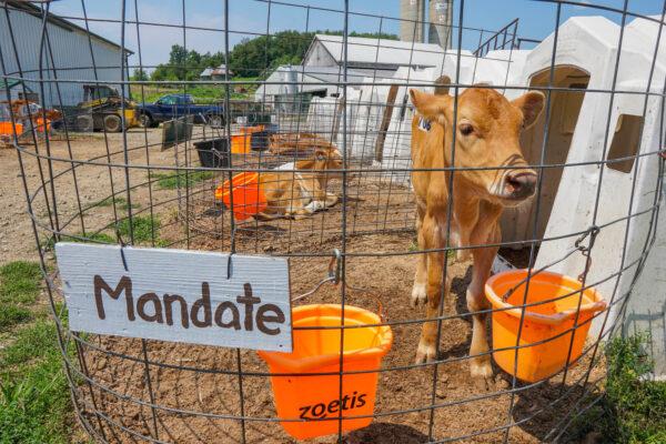 Maple Bottom Farm is a Dairy Farm