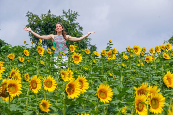 Angie's favorite flowers are sunflower
