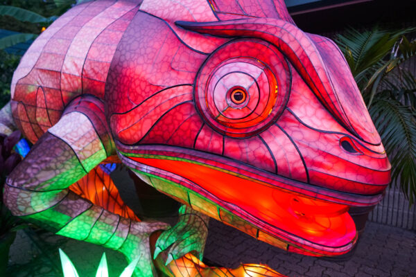 Color Changing Chameleon at the Pittsburgh Zoo's Asian Lantern Festival