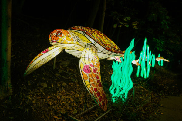 Sea turtles at the Asian Lantern Festival in Pittsburgh