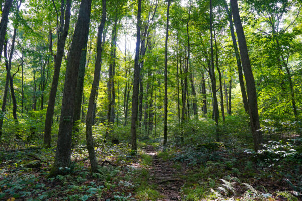Hiking Trail at Powdermill Nature Reserve