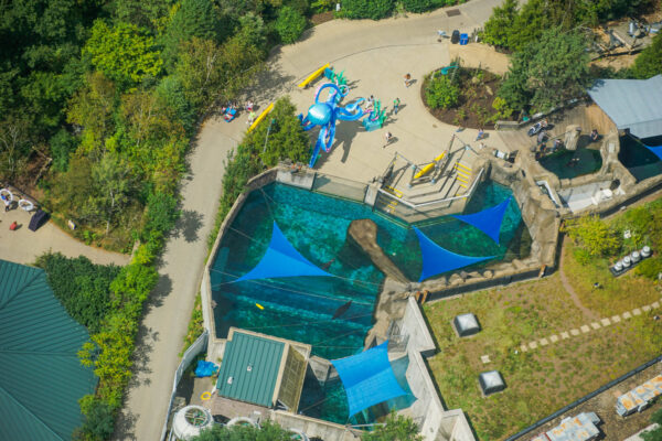 Sea Lions at the Zoo from a Helicopter