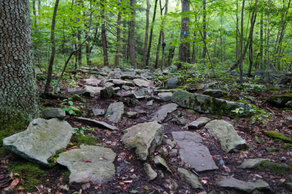 Rocky Path at Adams Falls Trail
